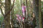 """Pikapolonice"" v gozdu"